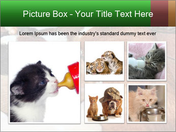 Cat PowerPoint Template - Slide 19