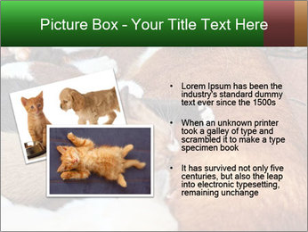Cat PowerPoint Template - Slide 20
