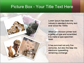 Cat PowerPoint Template - Slide 23