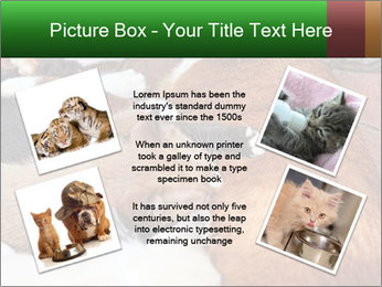 Cat PowerPoint Template - Slide 24