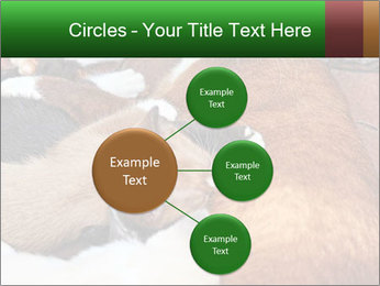 Cat PowerPoint Template - Slide 79