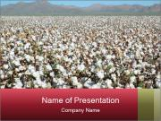 Fields of Cotton PowerPoint Templates