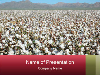 Fields of Cotton PowerPoint Template - Slide 1