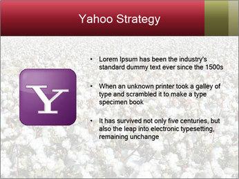 Fields of Cotton PowerPoint Template - Slide 11