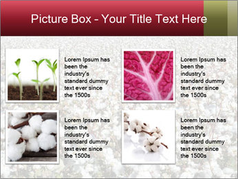 Fields of Cotton PowerPoint Template - Slide 14