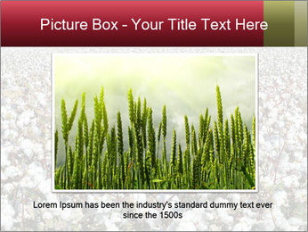Fields of Cotton PowerPoint Templates - Slide 15
