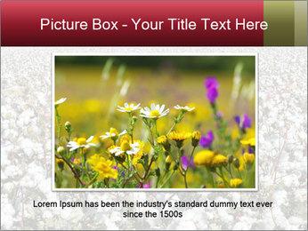 Fields of Cotton PowerPoint Template - Slide 16