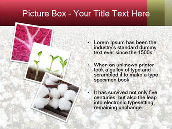 Fields of Cotton PowerPoint Template - Slide 17