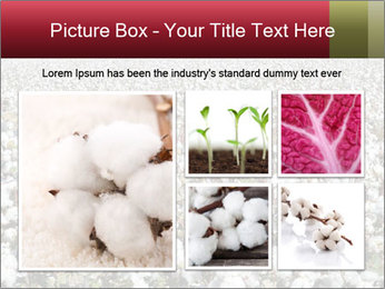 Fields of Cotton PowerPoint Template - Slide 19