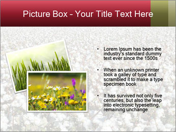 Fields of Cotton PowerPoint Template - Slide 20