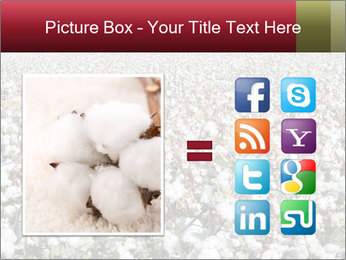 Fields of Cotton PowerPoint Template - Slide 21