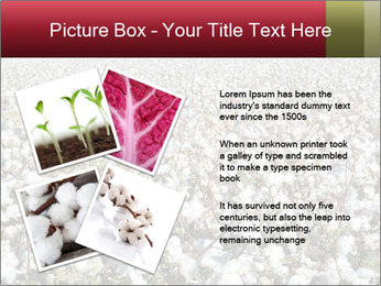 Fields of Cotton PowerPoint Template - Slide 23