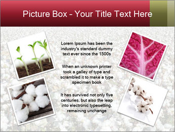 Fields of Cotton PowerPoint Templates - Slide 24