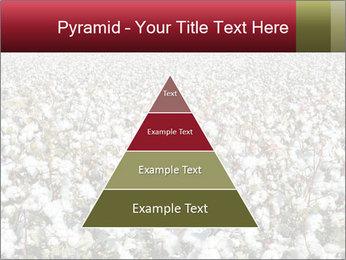 Fields of Cotton PowerPoint Templates - Slide 30