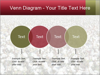 Fields of Cotton PowerPoint Template - Slide 32