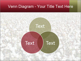 Fields of Cotton PowerPoint Template - Slide 33