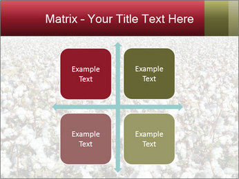 Fields of Cotton PowerPoint Templates - Slide 37