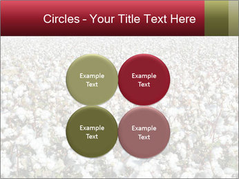 Fields of Cotton PowerPoint Template - Slide 38