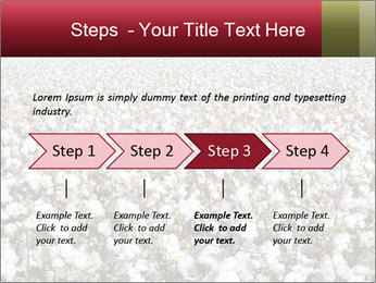 Fields of Cotton PowerPoint Template - Slide 4