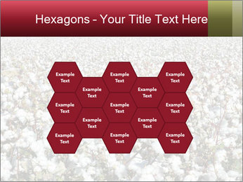 Fields of Cotton PowerPoint Template - Slide 44