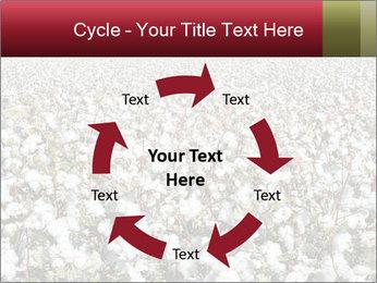 Fields of Cotton PowerPoint Template - Slide 62