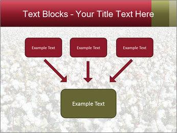 Fields of Cotton PowerPoint Template - Slide 70