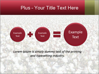 Fields of Cotton PowerPoint Template - Slide 75