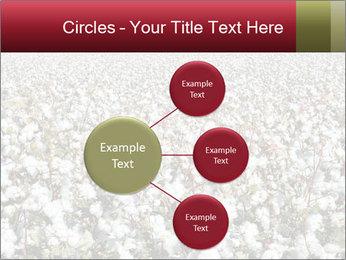 Fields of Cotton PowerPoint Template - Slide 79