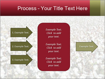 Fields of Cotton PowerPoint Template - Slide 85
