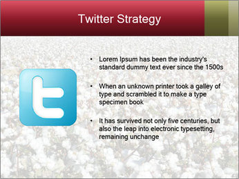 Fields of Cotton PowerPoint Template - Slide 9