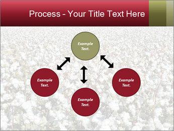 Fields of Cotton PowerPoint Template - Slide 91