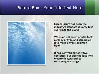 Florida Manatee PowerPoint Template - Slide 13