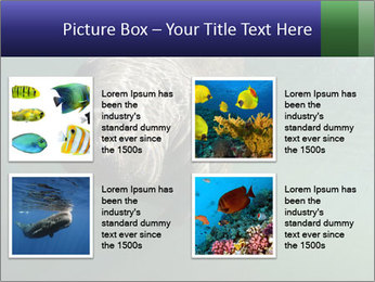 Florida Manatee PowerPoint Template - Slide 14