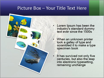Florida Manatee PowerPoint Template - Slide 17