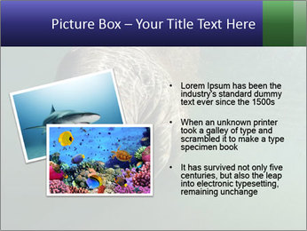 Florida Manatee PowerPoint Template - Slide 20