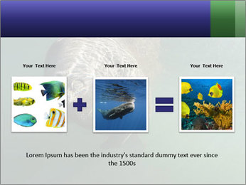 Florida Manatee PowerPoint Template - Slide 22
