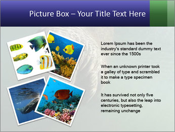 Florida Manatee PowerPoint Template - Slide 23