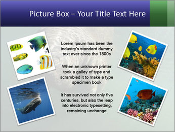 Florida Manatee PowerPoint Template - Slide 24