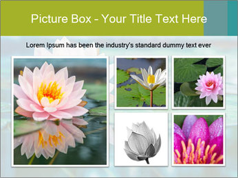 Beautiful Pink Lotus PowerPoint Template - Slide 19