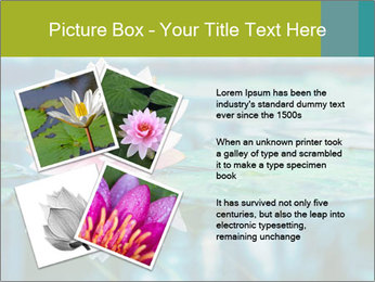 Beautiful Pink Lotus PowerPoint Template - Slide 23