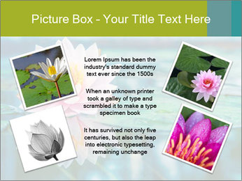 Beautiful Pink Lotus PowerPoint Template - Slide 24