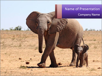 Mama And Baby Elephant PowerPoint Template