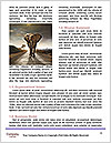 0000090631 Word Templates - Page 4