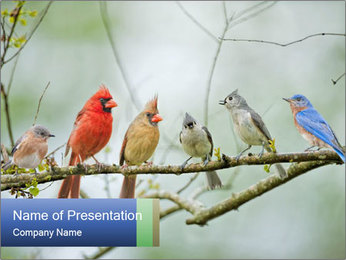 Colorful Birds PowerPoint Templates - Slide 1