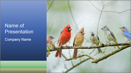 Colorful Birds PowerPoint Template