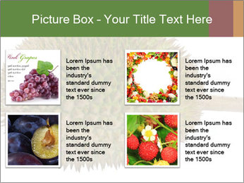 Durian PowerPoint Templates - Slide 14