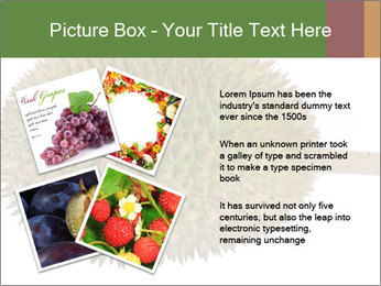 Durian PowerPoint Templates - Slide 23