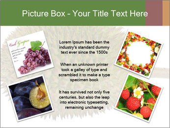 Durian PowerPoint Templates - Slide 24