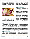 0000090672 Word Template - Page 4