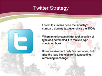 Bird and insects PowerPoint Templates - Slide 9